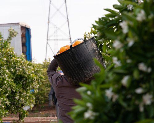 Fotografía Corporativa Naranjas Torres Agricultura y Alimentación